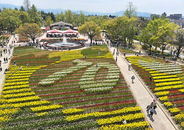 富山県砺波市「となみチューリップフェア」の70周年の大花壇