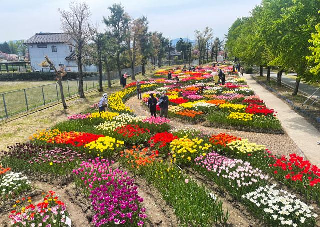 富山県砺波市「となみチューリップフェア」の彩ガーデン