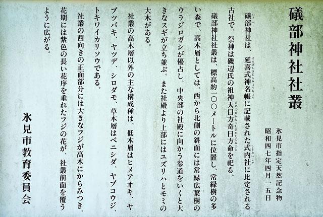 富山県氷見市ヤマフジの花で有名な「磯部神社」の社叢についての説明看板
