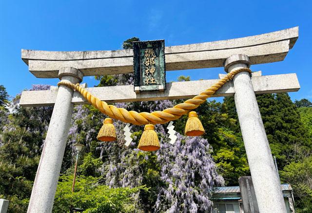 富山県氷見市ヤマフジの花で有名な「磯部神社」