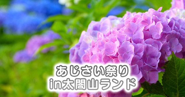 【あじさい祭りin太閤山ランド】ライトアップに天空カフェ、着物レンタルも!