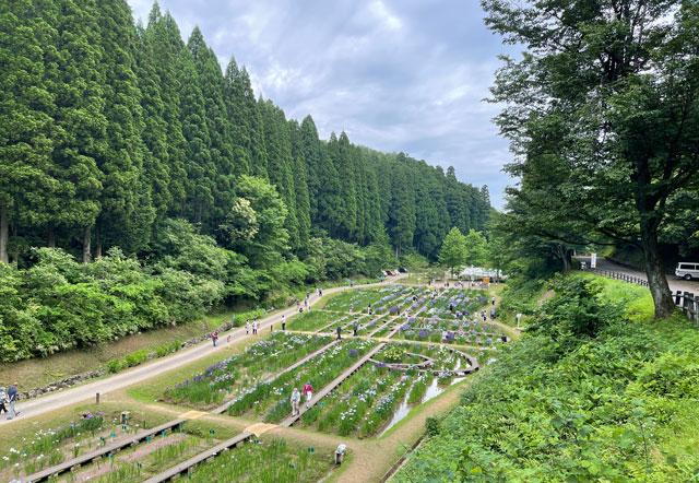富山県砺波市の「頼成の森 花しょうぶ祭り」の見下ろした景色