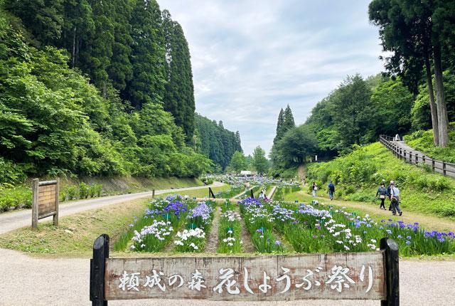 富山県砺波市の「頼成の森 花しょうぶ祭り」の看板