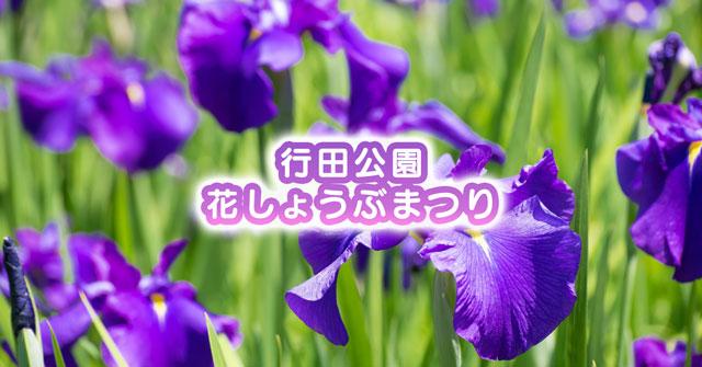 【滑川市の花しょうぶ祭り】行田公園ではライトアップにキャンドルナイトも!