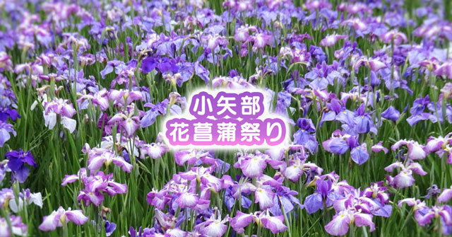【小矢部市の花菖蒲祭り】イベント内容や駐車場など