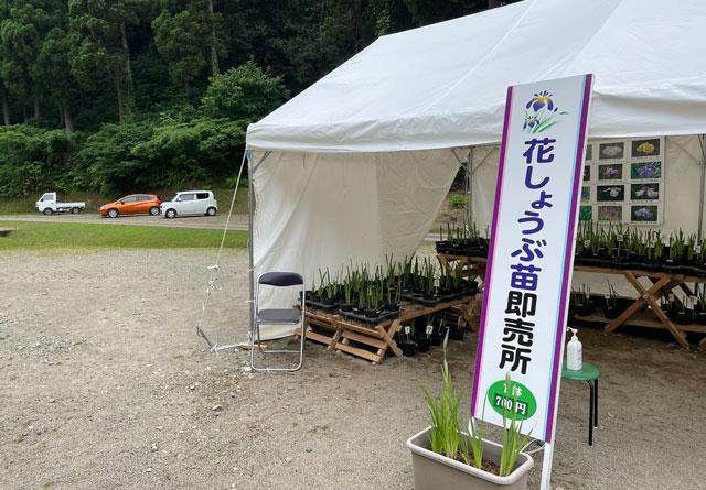 富山県砺波市の「頼成の森 花しょうぶ祭り」の花しょうぶの即売所