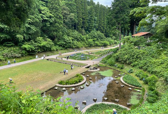 富山県砺波市の「頼成の森 花しょうぶ祭り」の見下ろした池