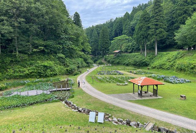 富山県砺波市の「頼成の森 花しょうぶ祭り」の一番奥からの景色