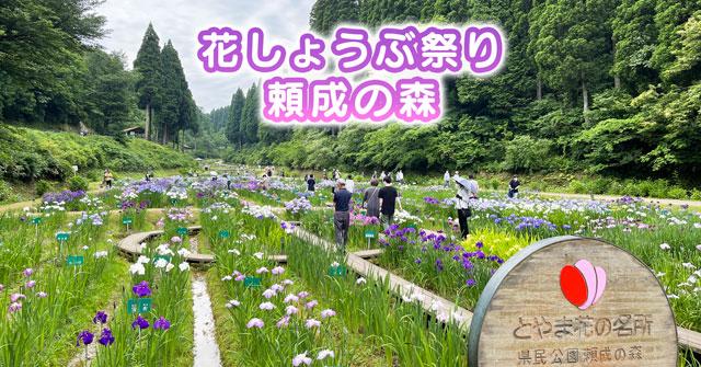 【頼成の森の花しょうぶ祭り2021】キレイだけど広いので注意!