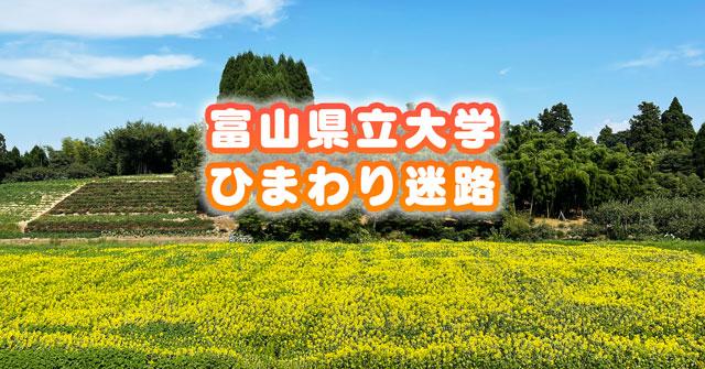 【射水市のひまわり迷路】富山県立大学のひまわり畑が映える【場所&駐車場】