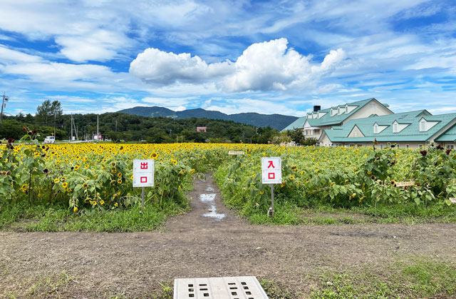 富山県南砺市桜ヶ池クアガーデンのひまわり畑の入口