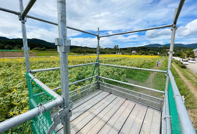 富山県南砺市桜ヶ池クアガーデンのひまわり畑のひまわり展望台からの眺め
