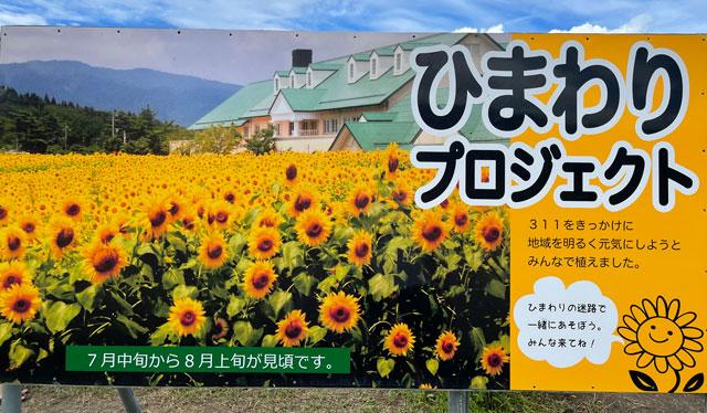 富山県南砺市桜ヶ池クアガーデンのひまわりプロジェクト2