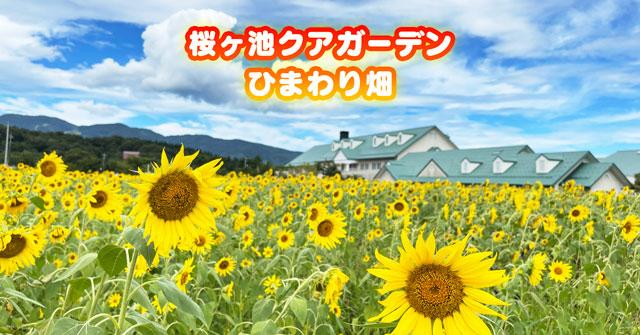 【南砺市のひまわり畑】桜ヶ池クアガーデンの向日葵【場所&駐車場】