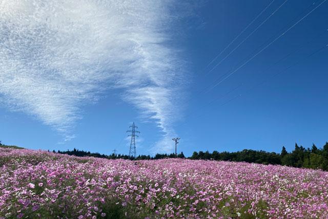 砺波市の夢の平スキー場で開催される「となみ夢の平コスモスウォッチング」広い空の開放感