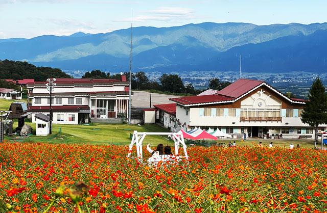 富山県南砺市イオックスサローザのキバナコスモス祭りの映える写真