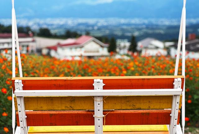 富山県南砺市イオックスサローザのキバナコスモス祭りのブランコ