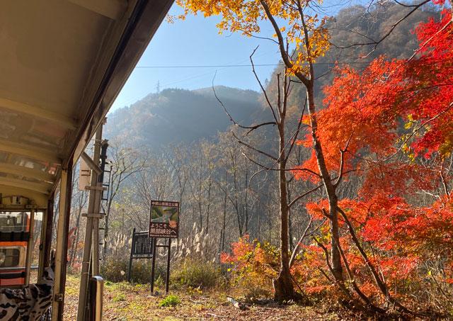 富山県黒部市宇奈月にある黒部峡谷トロッコ電車の紅葉
